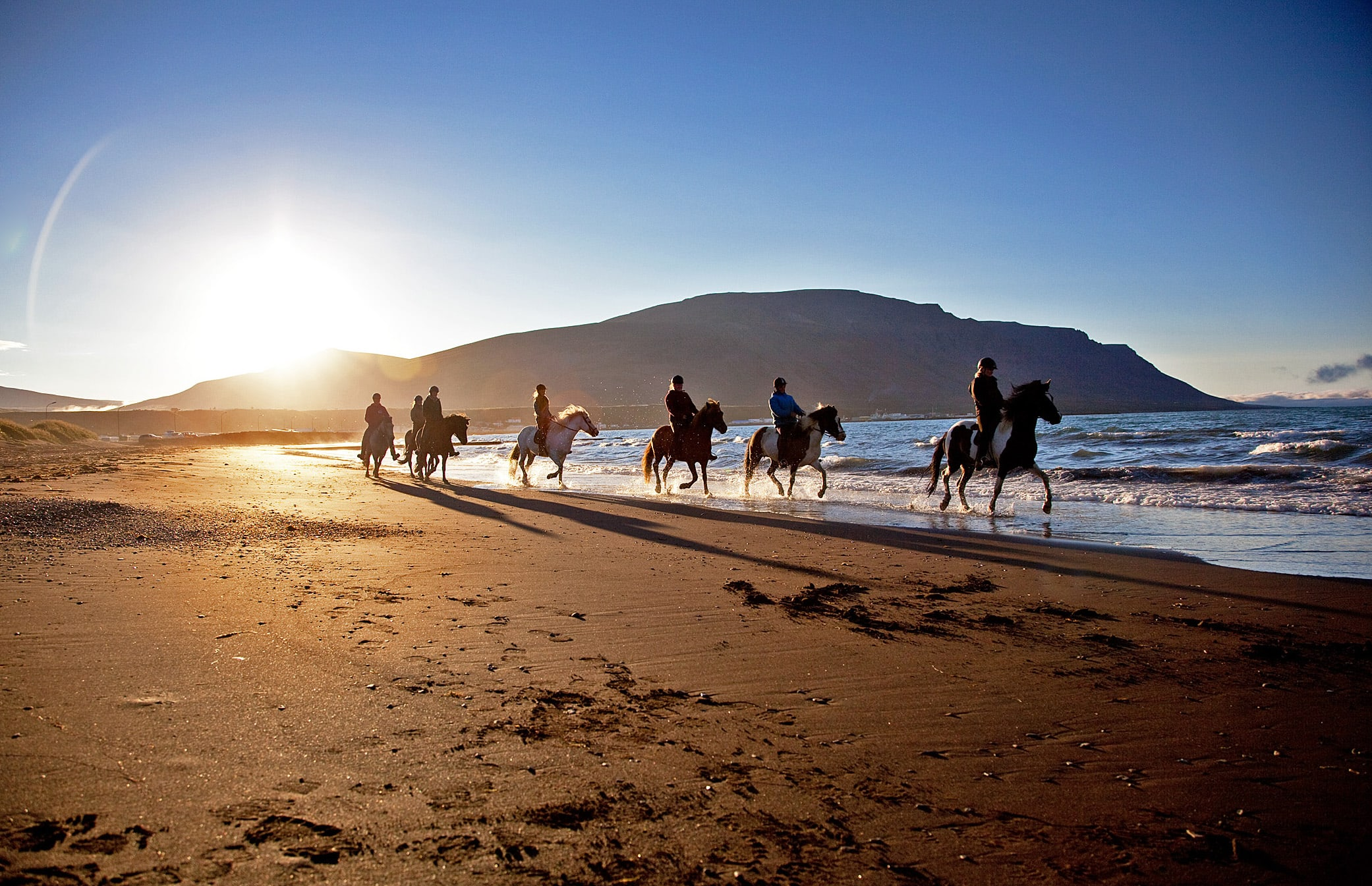 A group of 7 horses pictured trotting along one of Iceland's black sand beaches as the sun sets behind them
