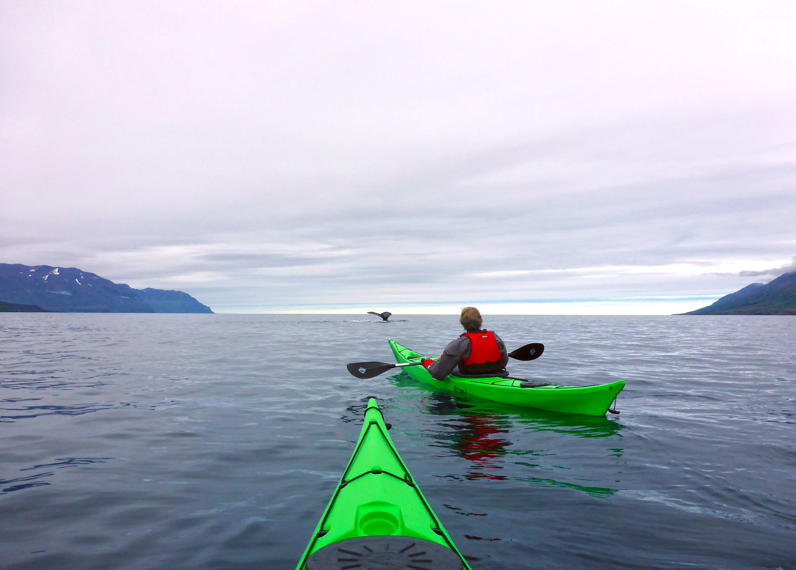 two people kayak in bright green kayaks in Iceland while watching the whales breach